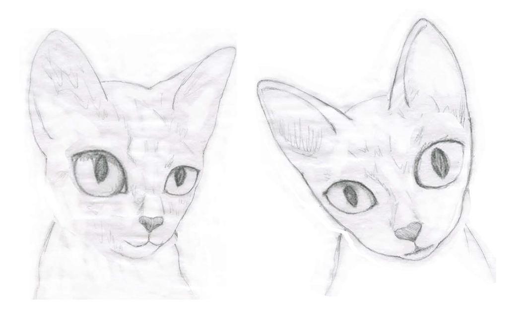 Cat-Sketches-3