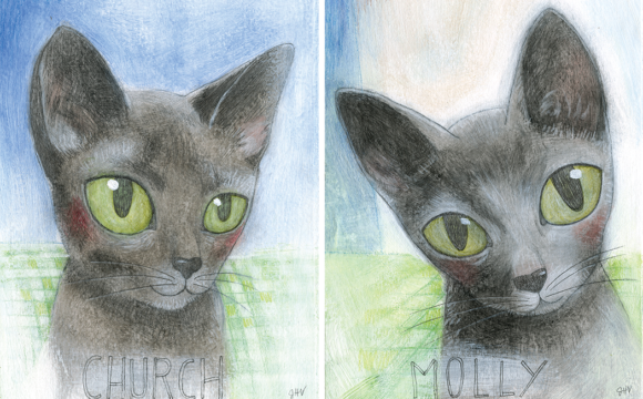 Cat Portraits – Molly & Church