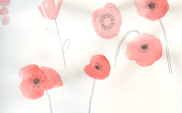Sketchbook Tuesday: Poppies