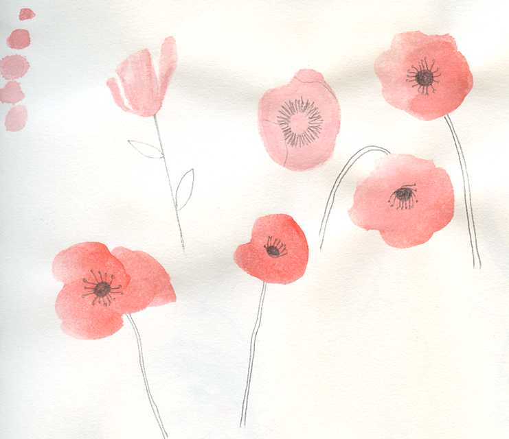 Sketch-poppies