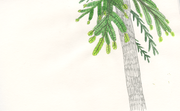 Sketchbook Tuesday: Pine Tree with New Growth